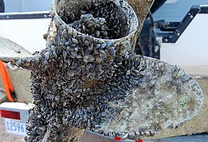A boat propeller engulfed by quagga mussels. Help keep our waters free of aquatic invasive species. (NPS Photo)