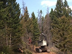 A feller-buncher cuts and removes trees, building a fire line near Bedrock Creek Road. 9-8-17 (USFS Photo)